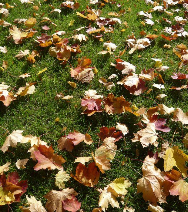 Spadané listí je pro většinu zahrádkářů obtížným odpadem, ale hodí se například od kompostu, kam doplní důležité živiny. foto: Lucie Peukertová