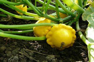 Proč se pustit do pěstování Bio zeleniny
