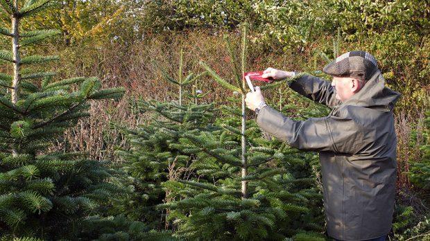 Inspektoři z Mountfieldu kontrolují a značkují vybrané stromky foto Mountfield
