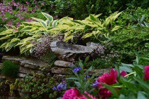 Celoročně efektní zahrada s vysokým poměrem stálezelných dřevin a trvalek s okrasnými listy. foto: Lucie Peukertová