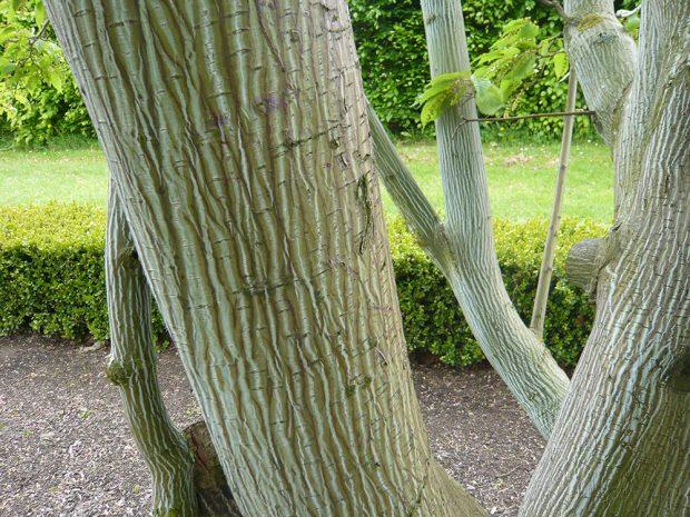 Dřeviny s okrasnou borkou oceníme hlavně v zimě. foto: Lucie Peukertová