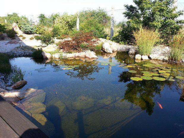 Koupací jezírko v asijské zahradě. foto: Lucie Peukertová