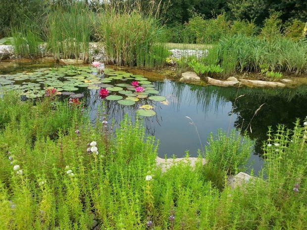 Okrasné jezírko v přírodní zahradě. foto: Lucie Peukertová
