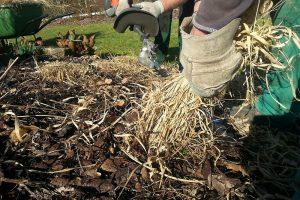 Řez okrasných trav nechte až na jaro, kdy začínají rašit nové listy. foto: Lucie Peukertová
