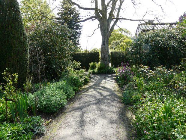 Neopadavé druhy by v zahradě neměly převládat, skvělý efekt vytvoří i v několika málo kusech nebo v podobě živého plotu. foto: Lucie Peukertová
