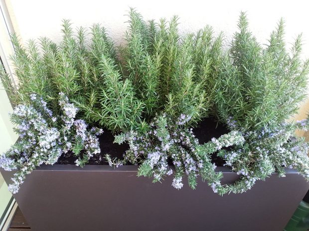 Pokud jste tak ještě neudělali, zazimujte rostliny vysazené v nádobách. foto: Lucie Peukertová