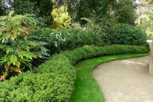 Stálezelené dřeviny mohou při správném použití zajímavě doplnit zahradu během celého roku. foto: Lucie Peukertová