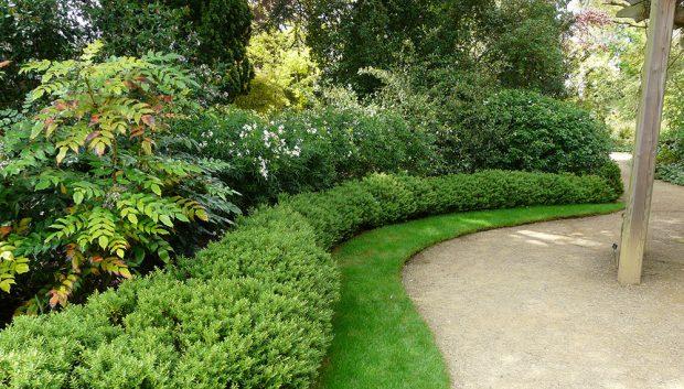 Stálezelené dřeviny a možnosti jejich uplatnění na zahradě
