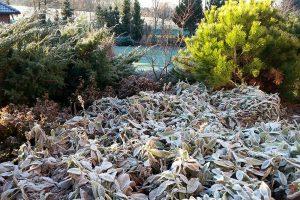 Zimní efekt stálezelených dřevin. foto: Lucie Peukertová