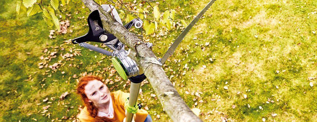 Jak a kdy prořezat větve?