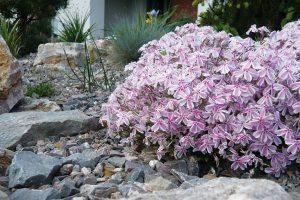 Častá chyba je, že se rostliny vysazují do jiných podmínek, než které jim vyhovují. FOTO LUCIE PEUKERTOVÁ