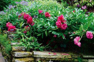 Několik tipů na různé druhy trvalkových výsadeb