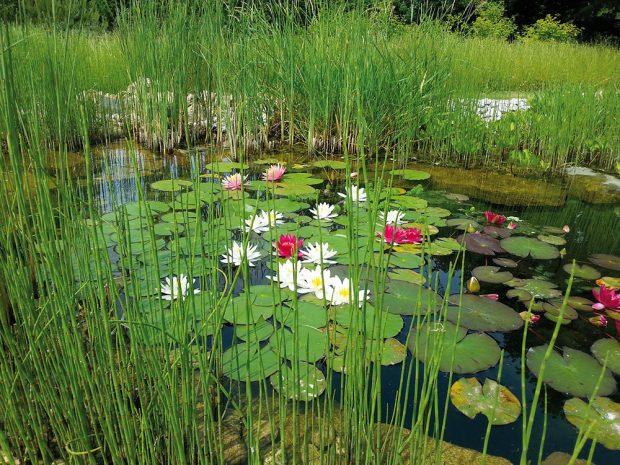 Vodní svět v květu. FOTO LUCIE PEUKERTOVÁ