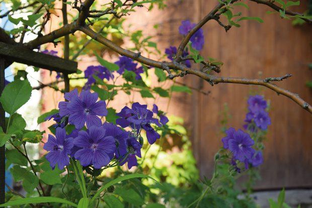 Květiny pro pohled zblízka mají na zahradě také své místo. FOTO LUCIE PEUKERTOVÁ