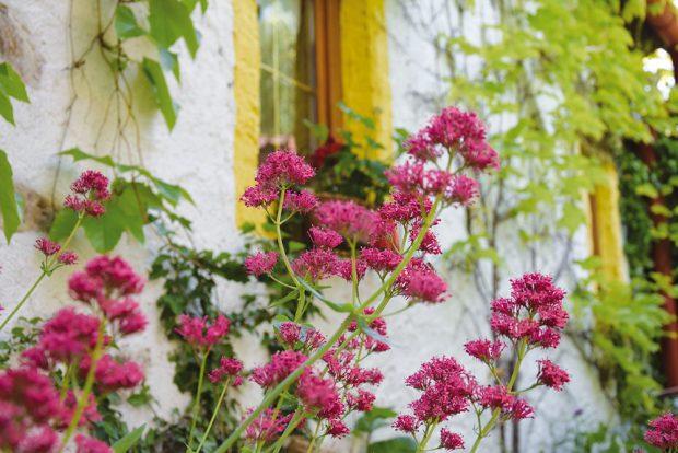 Venkovské květinové výsadby ve znamení nostalgie. FOTO LUCIE PEUKERTOVÁ