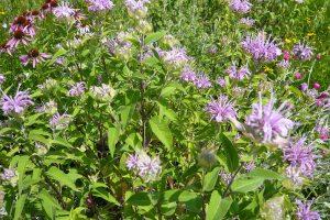 Do bylinkové spirály nakombinujte takové druhy, které zužitkujete. foto: Lucie Peukertová