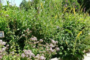Klasické bylinkoviště většinou umožňuje pěstování rostlin se stejnými požadavky na stanoviště. foto: Lucie Peukertová