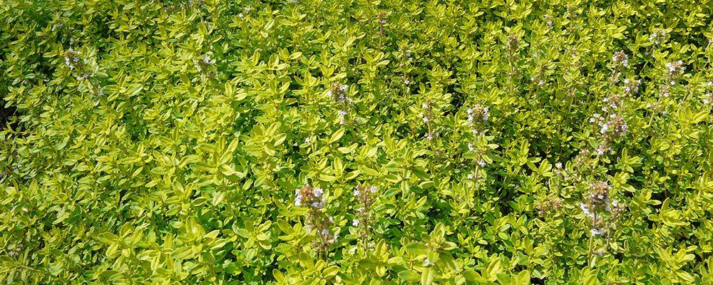 Pěstování v bylinkové spirále: Jak si zajistit bohatou úrodu léčivých rostlin?