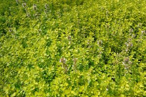 Na vrchol spirály vždy vysazujte bylinky na plné slunce odolné suchu. foto: Lucie Peukertová