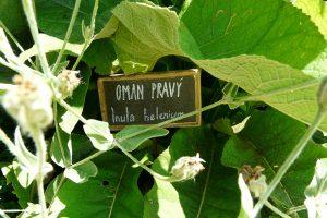 Pokud nejste v pěstování bylinek zkušení, můžete si jednotlivé druhy označit cedulkou s názvem.