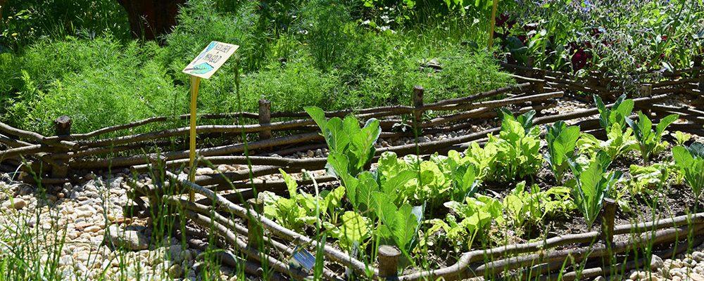 Péče o užitkovou zahradu bez chemie