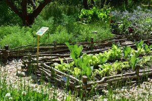Své plodiny si můžete ochránit i poněkud netradičním způsobem. Vedle pěstované zeleniny vysazujte druhy, které odpuzují škůdce. foto: Lucie Peukertová