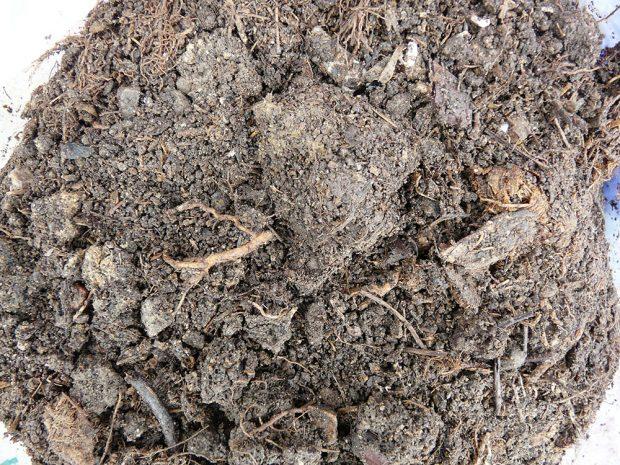 Zahradní kompost obsahuje kromě živin také důležité půdní mikroorganismy, které rozkládají organickou hmotu. Foto: Lucie Peukertová