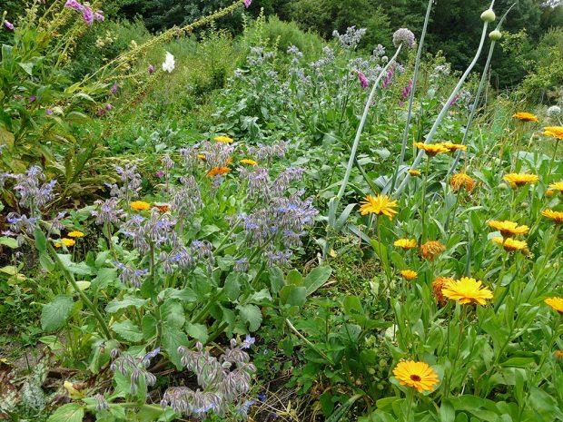 Zahradu založte na druhové pestrosti. Využijte zvláště potenciál užitečných druhů bylinek. foto: Lucie Peukertová