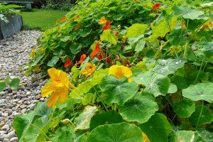 Založte svým dětem bylinkové či zeeninové záhony, o které se budou starat. foto: Lucie Peukertová