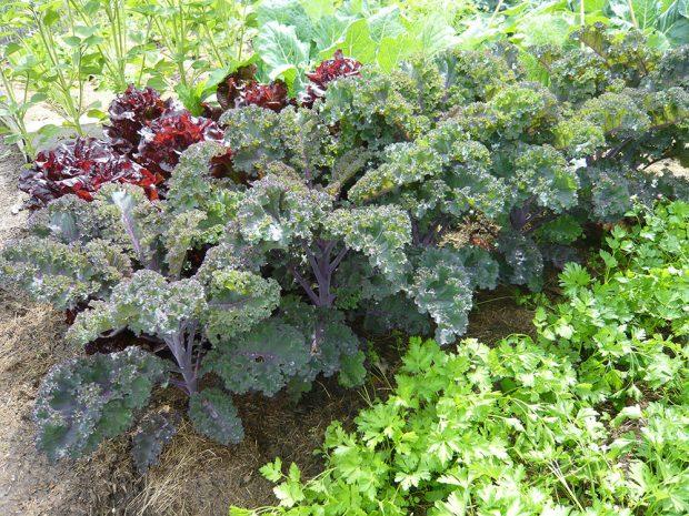 Zeleninu pěstujte v polykultuře nebo plošně malých monokulturách. foto: Lucie Peukertová