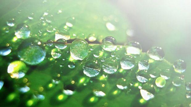 S kapkami rosy stékají po listech i nečistoty. Na tzv. rosa efektu funguje i omítka DuoCem. Zdroj LB Cemix