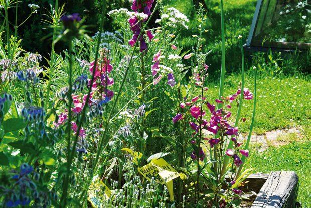 Jedovaté druhy léčí půdu svými kořenovými výběžky. FOTO LUCIE PEUKERTOVÁ