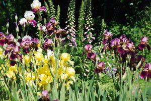 Mezi trvalkami by měly převažovat druhy bohaté na nektar a pyl. FOTO LUCIE PEUKERTOVÁ