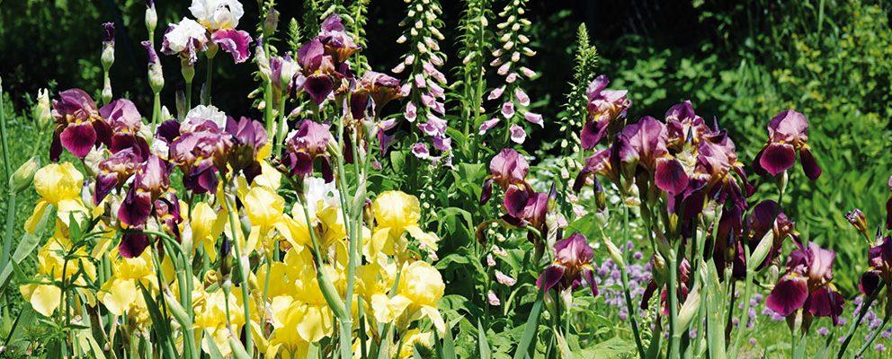 Proč si založit přírodní zahradu?
