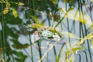 Na zahradě mohou s likvidací škůdců pomoci užiteční živočichové. FOTO LUCIE PEUKERTOVÁ