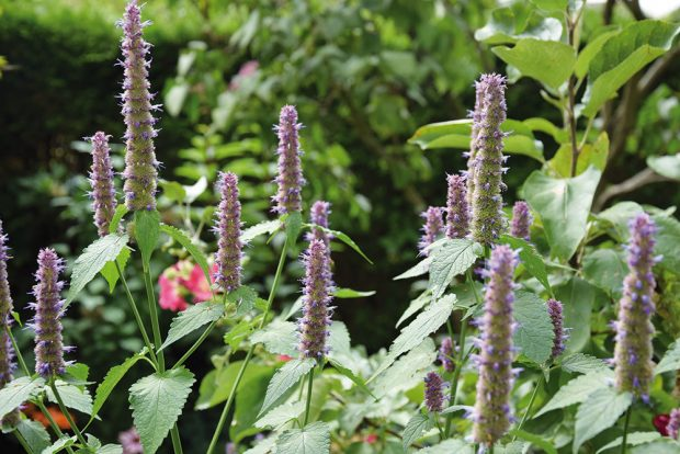 Jak si založit bylinkovou zahrádku?