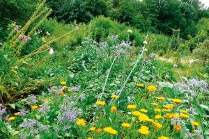 Permakulturní bylinkoviště s druhy, které se samovolně přesévají. FOTO LUCIE PEUKERTOVÁ