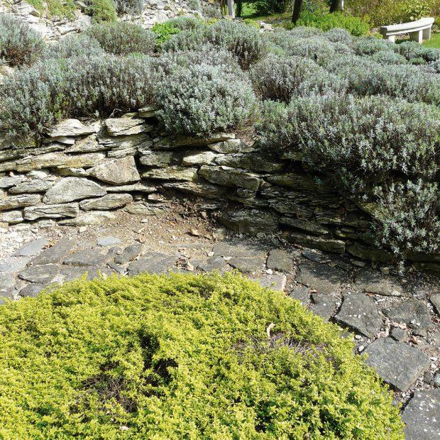 Kámen hraje v bylinkových výsadbách roli sluneční pasti. FOTO LUCIE PEUKERTOVÁ