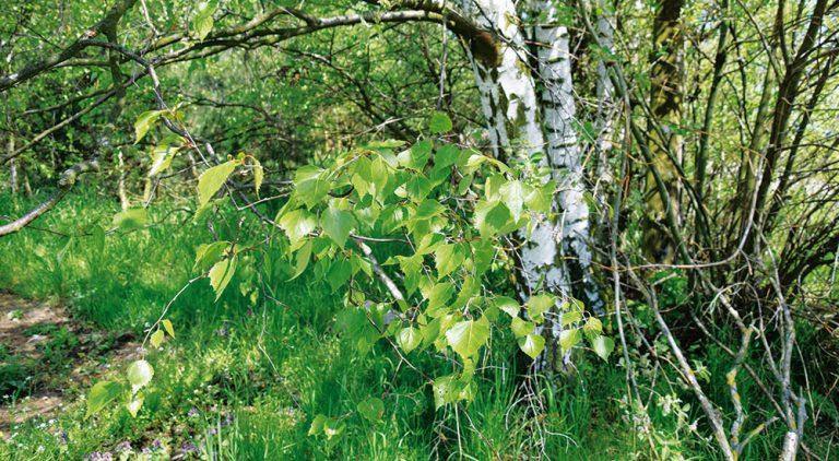 I v městské zahradě se můžete těšit z koutku plného užitečných stromů a kerů