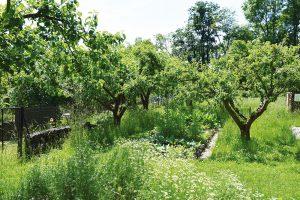 Do jedlého lesa vysaďte ovocné iléčivé stromy. Zajistí vám nejen sklizeň skvělých plodů, ale také léčivé květy alisty, které využijete ve chvílích, kdy budete nemocní. FOTO LUCIE PEUKERTROVÁ