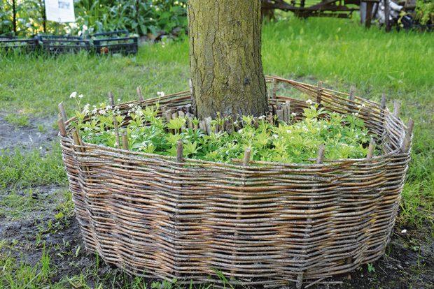 Do podrostu vybírejte stínomilné bylinky, jako je mařinka vonná či kostival lékařský. FOTO LUCIE PEUKERTROVÁ