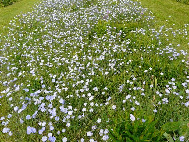 Při výběru rostlin se vždy informujte o jejich chyrakteru růstu a expanzivitě. Některé bujné druhy totiž dokáží zcela vytlačit ostatní druhy. Foto Lucie Peukertová