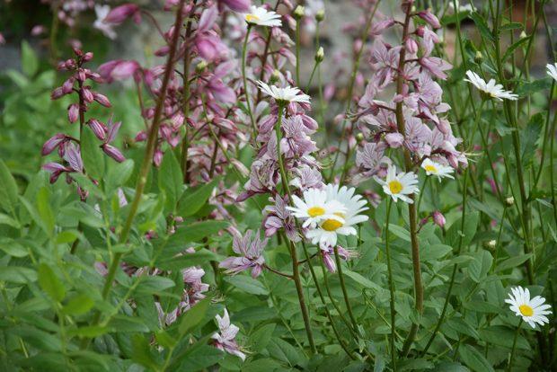V přírodě blízkých výsadbách počítejte s druhovou proměnlivostí. Záhon se bude každým rokem měnit. Foto Lucie Peukertová