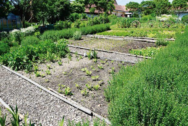 Větší děti zapojte do pěstování zeleniny abylinek. Jejich vlastní záhony je budou bavit. FOTO LUCIE PEUKERTOVÁ