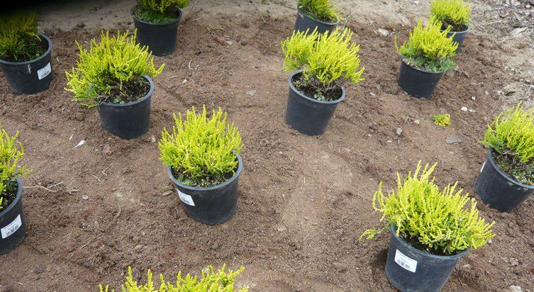 Výsadby rostlin na zahradě, aneb jak správně na to