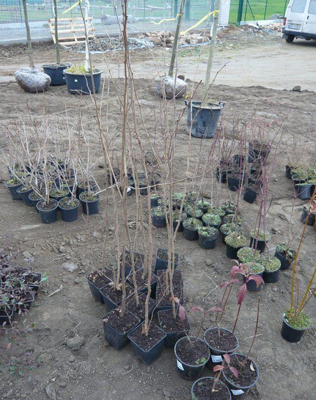 Při výsadbě rostlin lze udělat celou řad chyb, které se promítnou do kvality pěstovaných rostlin. foto: Lucie Peukertová