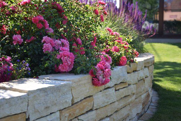 Růže patří mezi nejoblíbenější keře, které zajímavě vyniknou především v květinových zahradách, kde chcete dosáhnout výrazného efektu. foto: Lucie Peukertová