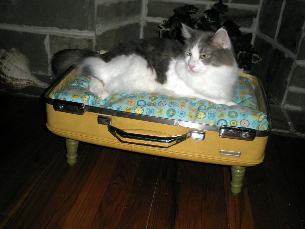 Co se starým kufrem? Vyrobte pelíšek pro domácího mazlíčka!