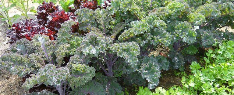Rostlinní lékaři pro užitkovou zahradu