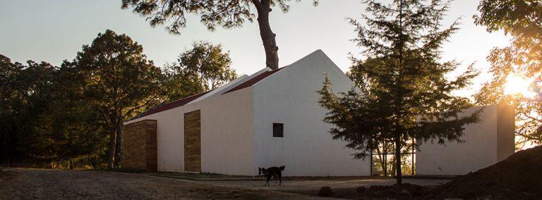 Velkou borovici na pozemku nepokáceli, ale dům postavili kolem ní